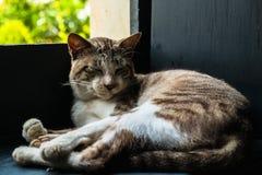 Schlafenkatzenporträt Stockbilder
