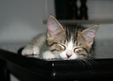 SchlafenMiezekatze Lizenzfreies Stockbild