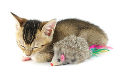 SchlafenMiezekatze und Spielzeugmaus Lizenzfreies Stockfoto
