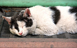 Schlafenschwarzweiss-Katze Lizenzfreies Stockfoto