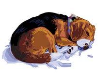 Schlafenspürhund Stockbild