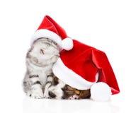 Schlafenwelpe und schottisches Kätzchen in roten Sankt-Hüten Getrennt Lizenzfreies Stockfoto