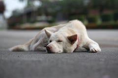 Schlafhund Stockbild