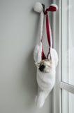 Schlafkatze Stockbild