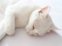 Schlafweißkatze Lizenzfreie Stockfotos