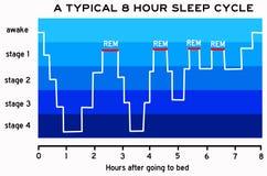 Schlafzyklus lizenzfreie abbildung