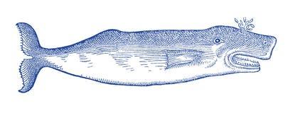 Schlagbartenwal Illustration nach einem historischen oder Weinleseholzschnitt vom 16. Jahrhundert stock abbildung