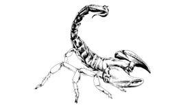 Schlaggerät-Skorpion mit einem giftigen Stich eigenhändig gezeichnet in Tinte Lizenzfreie Stockfotos