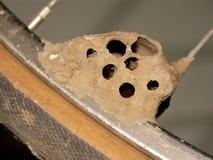 Schlamm Dauber-Nest und Fahrrad-Reifen Stockbild