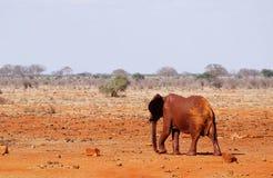 Schlamm-gekleideter Elefant am waterhole von Tsavo Ost-Kenia Lizenzfreie Stockfotos