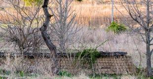 Schlammbacksteinmauer mit dem schwarzen Ziegeldach gefallen in Zustand von disrep Lizenzfreies Stockfoto