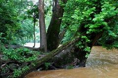 Schlammiger Fluss Lizenzfreie Stockbilder