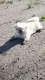 Schlammiger Hund Stockfotos