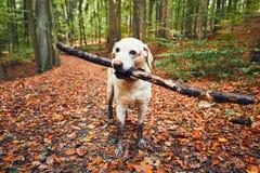 Schlammiger Hund in der Herbstnatur Lizenzfreies Stockfoto