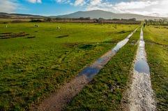 Schlammiger Weg, der grüne Schafweiden kreuzt lizenzfreies stockbild