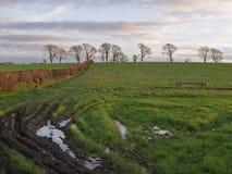 Schlammiges Feld an der Dämmerung Stockfotos