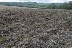 Schlammiges Feld von Stubble nach der Ernte lizenzfreies stockfoto
