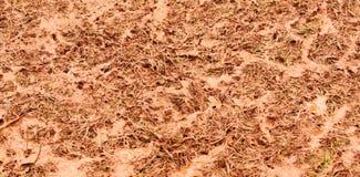 Schlammiges Gras der Nahaufnahme lizenzfreie stockbilder