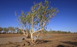 Schlammiges Hinterland waterhole mit Baum lizenzfreie stockfotos