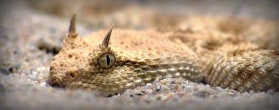 Schlange Stockbild