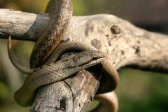 Schlange Stockbilder