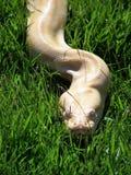 Schlange stockfotografie