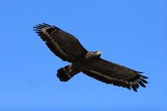 Schlange-Adler Stockbild