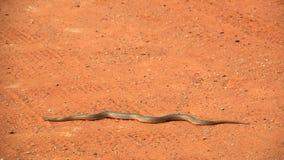 Schlange auf der Sandauflage Stockfotos