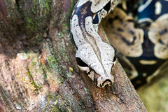 Schlange auf einem Baumast Stockbild