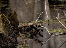 Schlange auf einem Glied Stockbilder