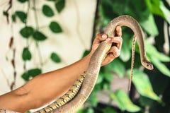 Schlange auf einer Hand lizenzfreie stockfotos