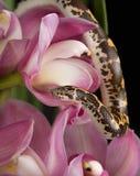 Schlange in den Blumen Lizenzfreie Stockfotografie
