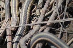 Schlange in den Zweigen Lizenzfreies Stockbild