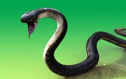 Schlange der Königskobra 3d Stockfotos
