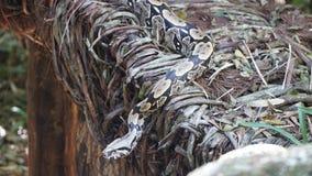 Schlange in der Natur lizenzfreie stockfotografie