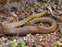 Schlange in der Natur lizenzfreies stockfoto