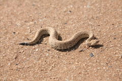 Schlange in der Wüste Lizenzfreie Stockbilder