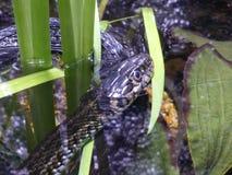Schlange, die heraus der Welt betrachtet stockfotos