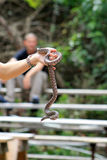 Schlange, die von der Hand hängt Stockfoto