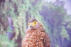 Schlange Eagle Lizenzfreie Stockfotos