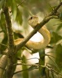 Schlange in einem Baum Stockfotografie