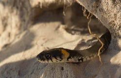 Schlange in einem Loch Stockfoto