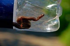 Schlange in einer Flasche lizenzfreie stockfotos