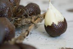 Schlange-Frucht Stockfotografie