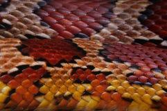 Schlange-Haut Stockbild