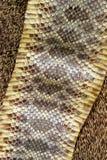 Schlange-Haut Lizenzfreie Stockfotografie