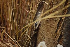 Schlange im Gras Lizenzfreies Stockfoto