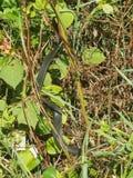 Schlange im Gras Lizenzfreies Stockbild