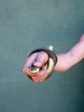 Schlange ist in einer Hand. Lizenzfreie Stockfotos
