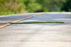 Schlange kriecht Straße Lizenzfreie Stockfotografie
